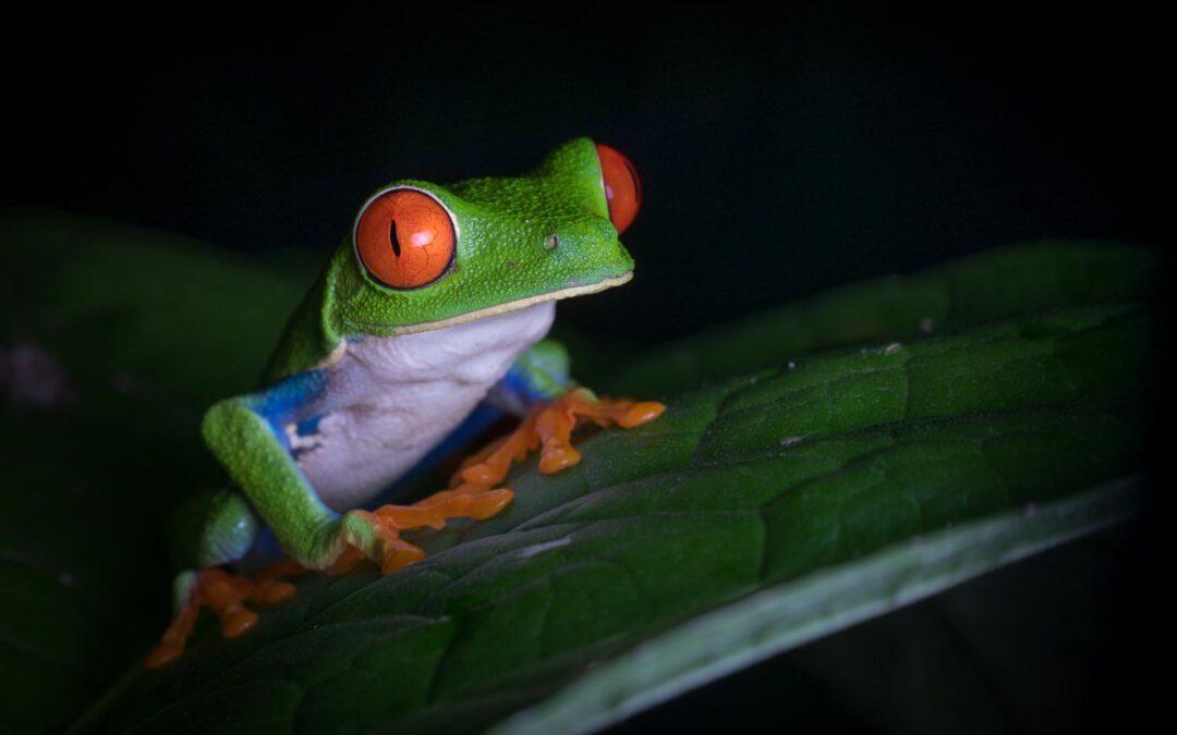 Costa Rica Fotogalerie